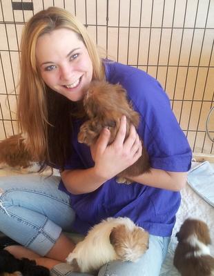 Shorkie puppies,Shorkie,Shorkie Puppies For Sale,Shorkie
