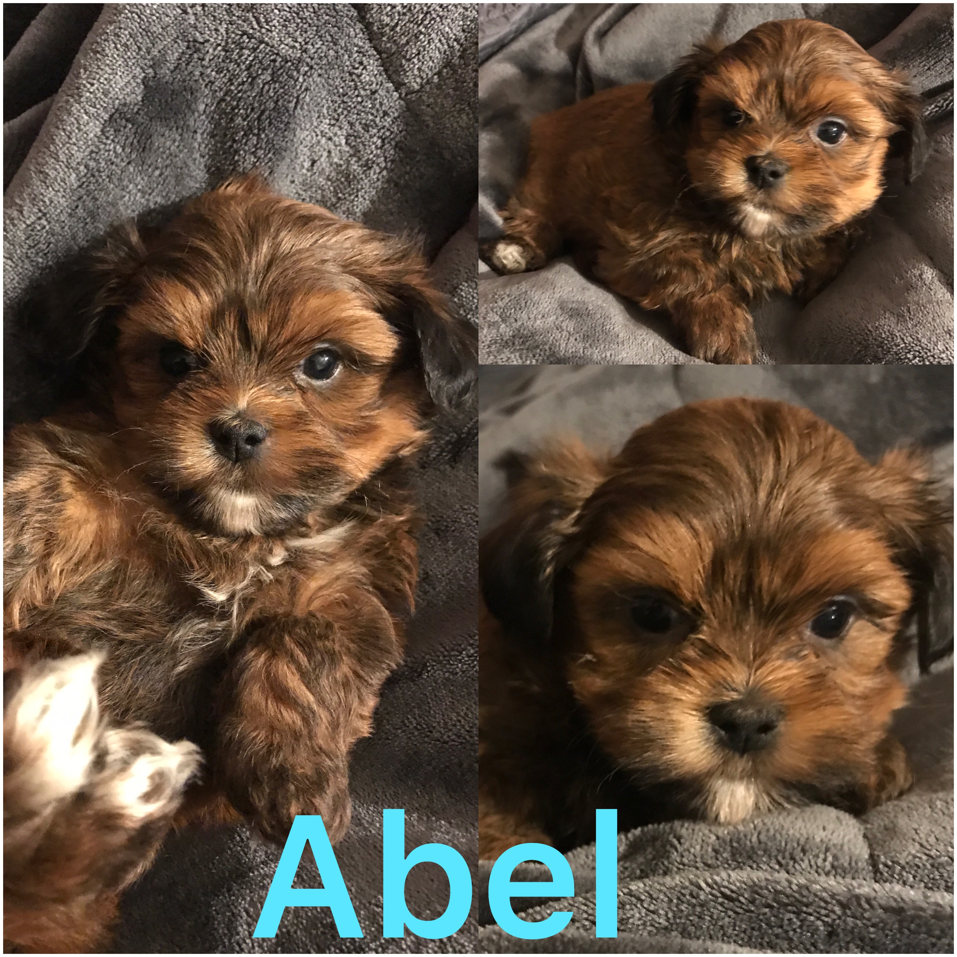 Abel Is ADOPTED BY LISA!