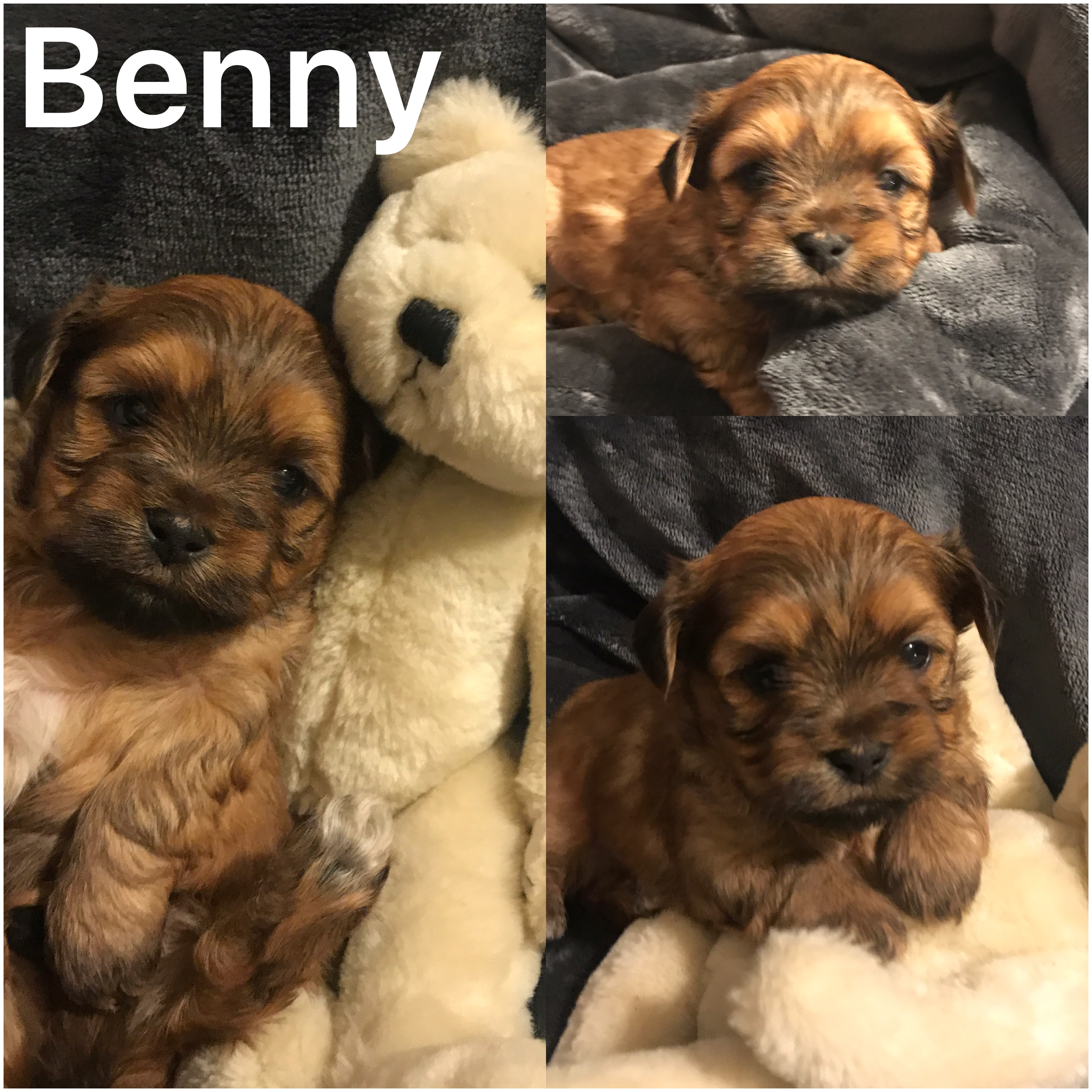 Benny is ADOPTED SANDY AND FAMILY