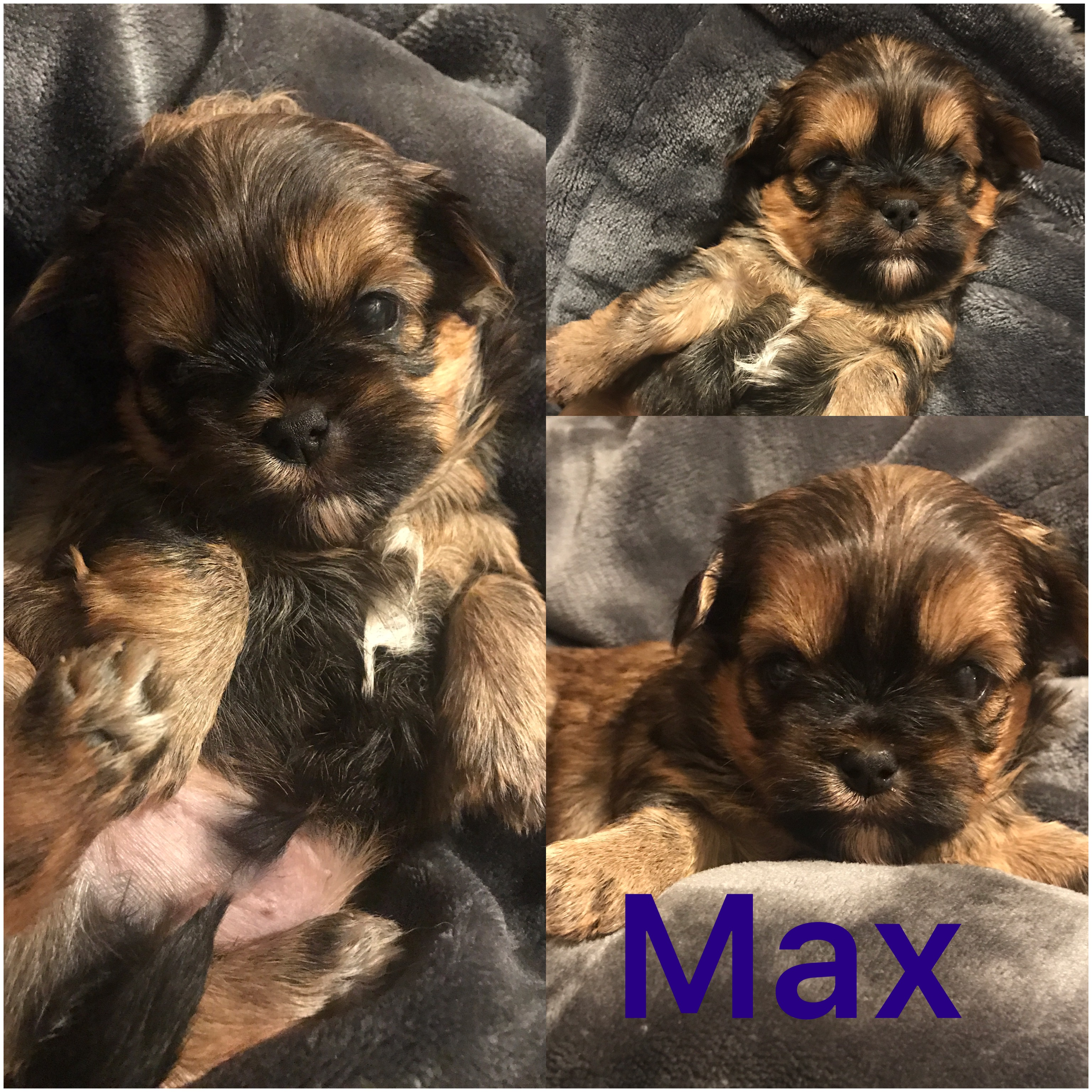 Max is ADOPTED by Deb and family