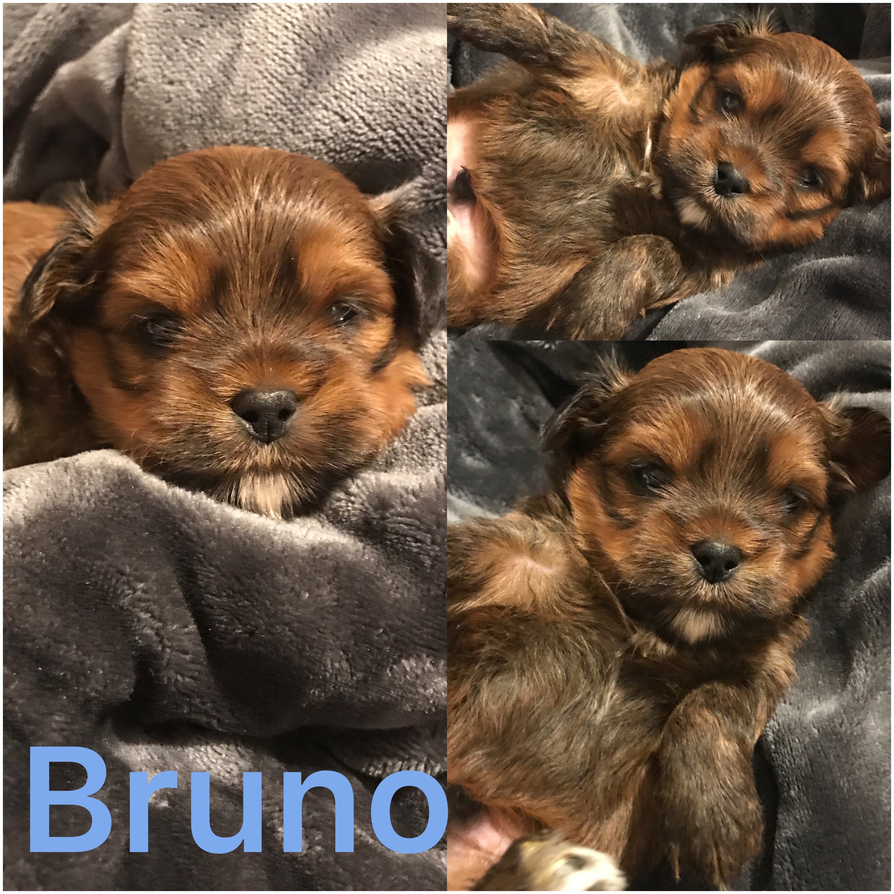 Bruno ADOPTED by Shannon and family