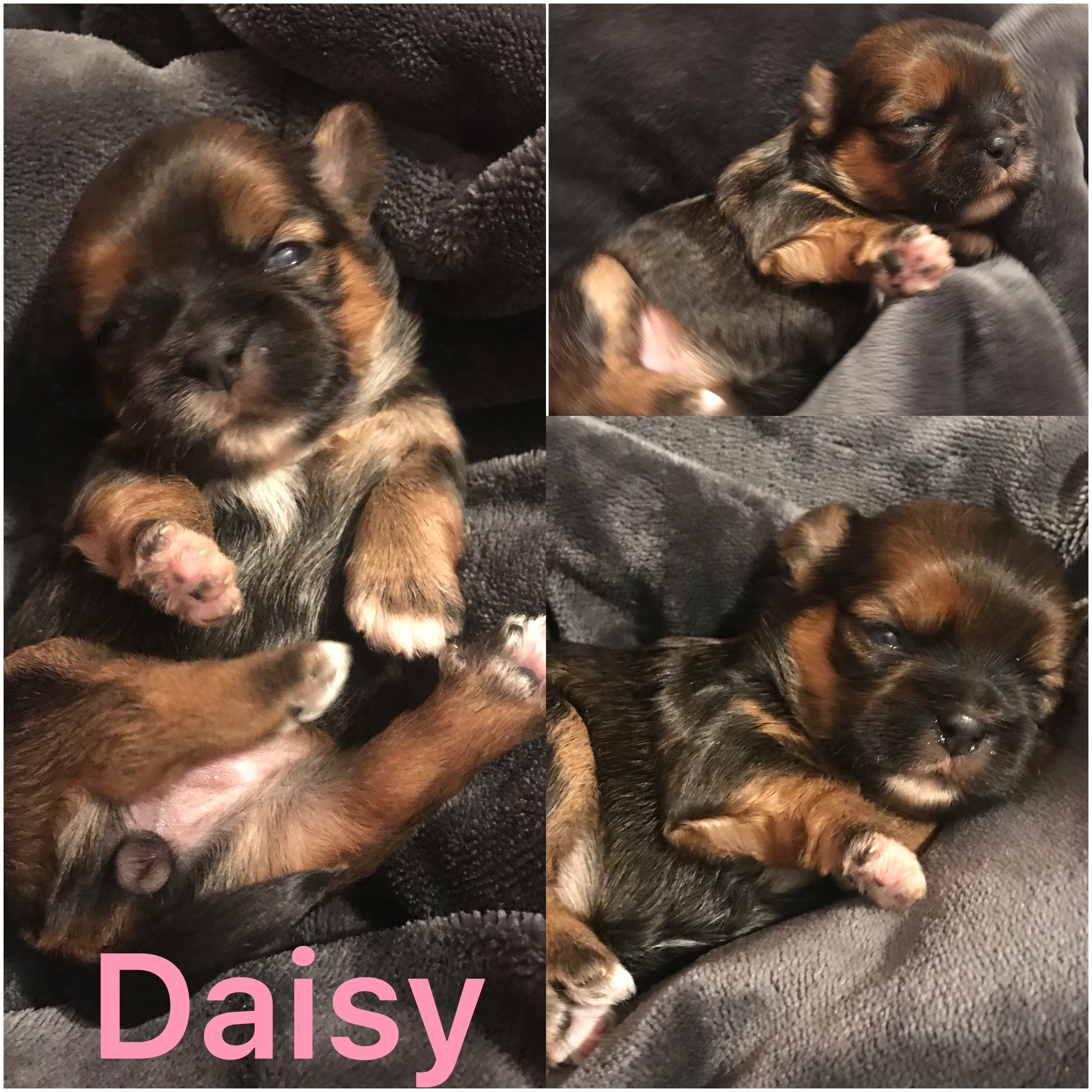 Daisy IS ADOPTED BY ANDREA!