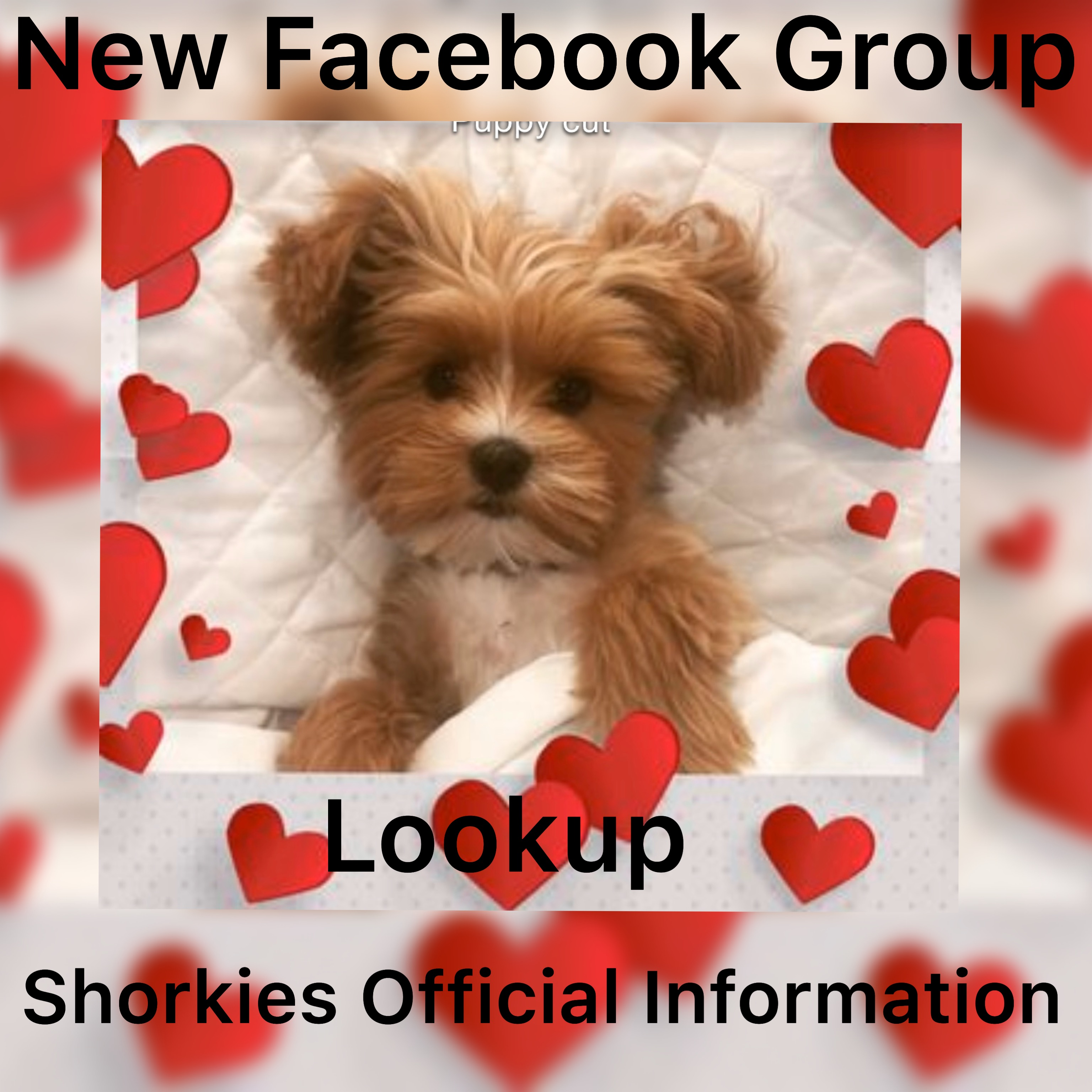 NEW FACEBOOK GROUP! Shorkies Official Information