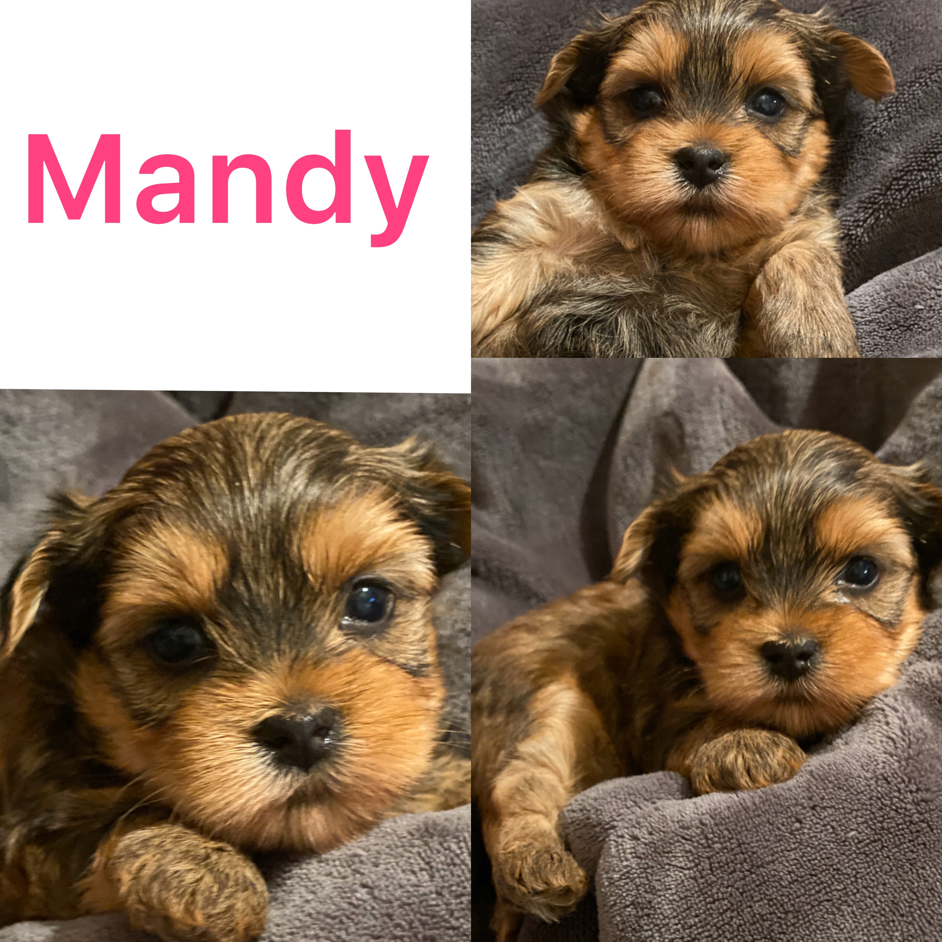Mandy Is ADOPTED! Click On Pic For Info