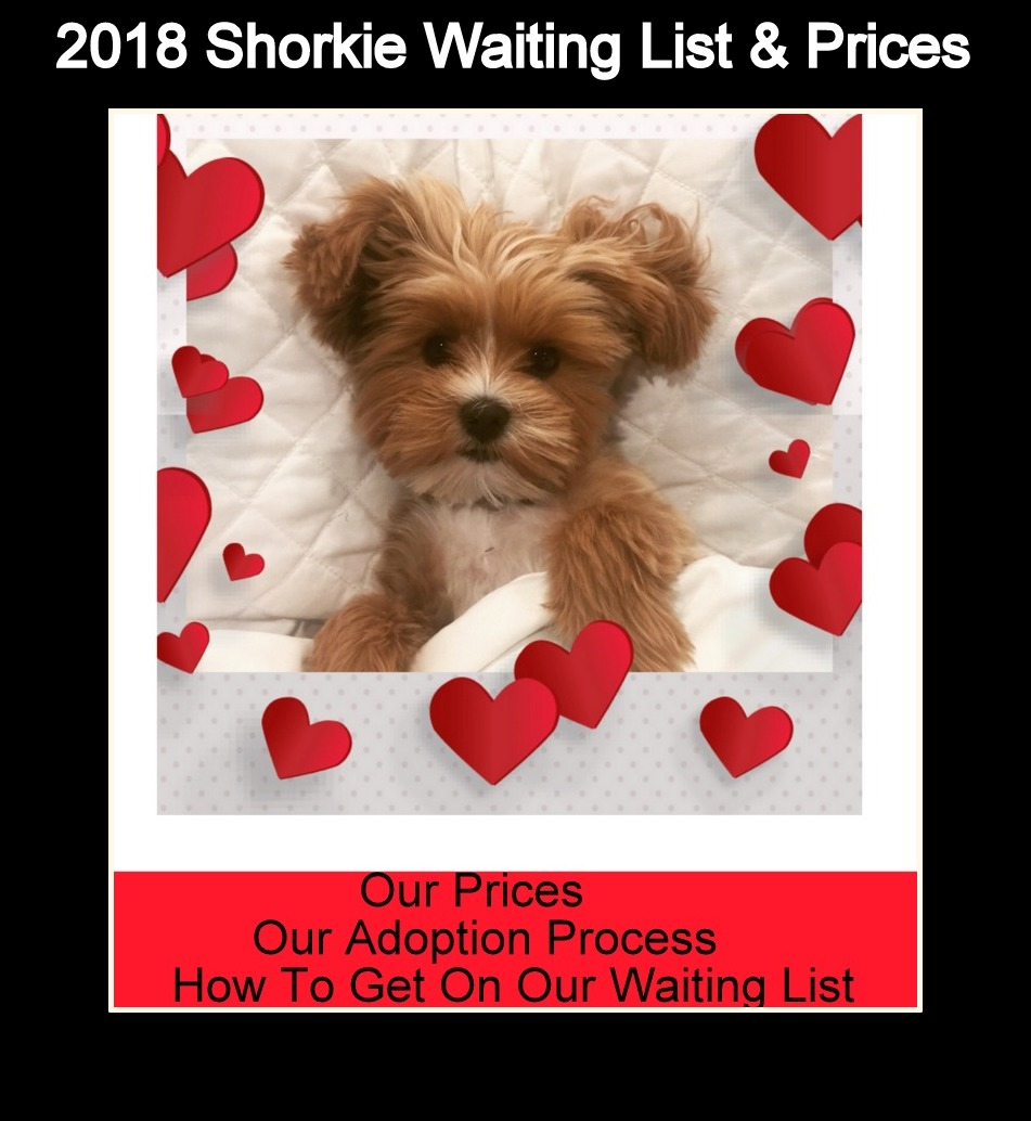 PRICES OF OUR PUPPIES and WHAT COMES NEXT