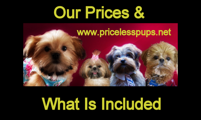 Prices Of Priceless Pups Shorkies