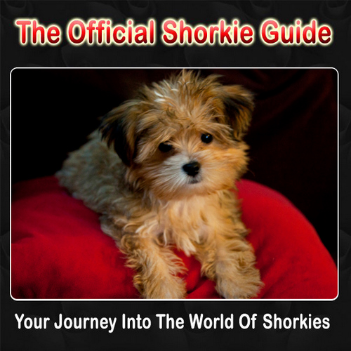 Shorkie puppies,Shorkie,Shorkie Puppies For Sale,Shorkie Breeder