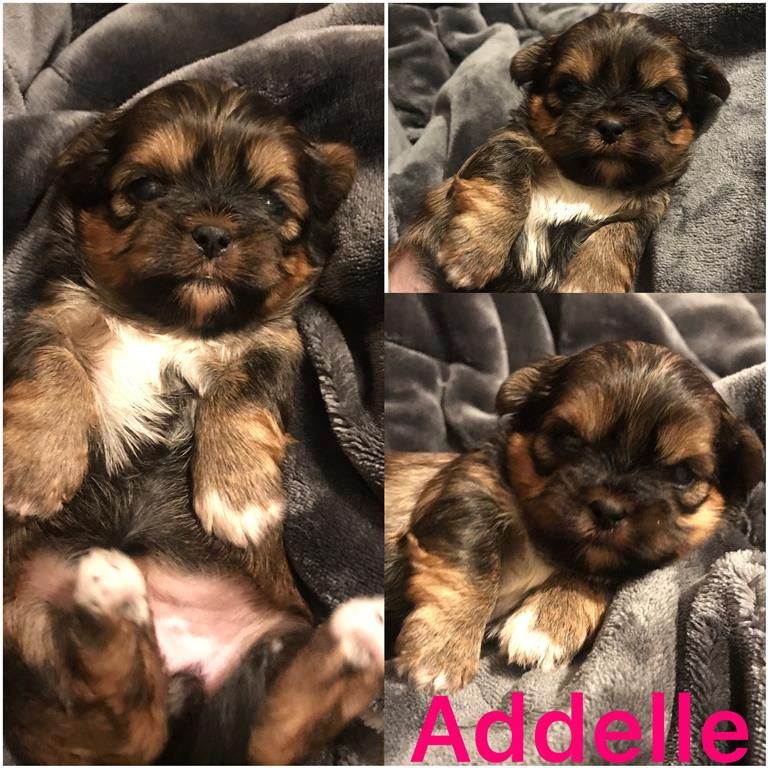 Addelle is ADOPTED